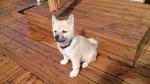 Noen sier at jeg ligner litt på tegneseriehunden Bolt. Gjør jeg det?