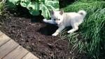 For eksempel til å grave et hull ved rabarbraen.