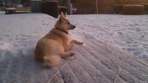 Den første snøen på hytta